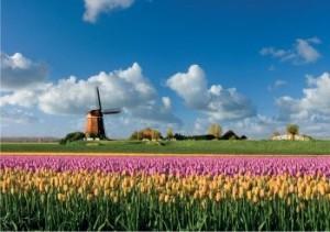 praca-w-holandii-kwiaty